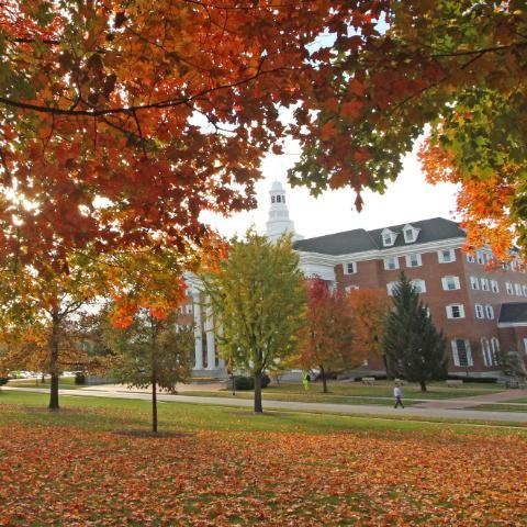 bgc leaves autumn fall