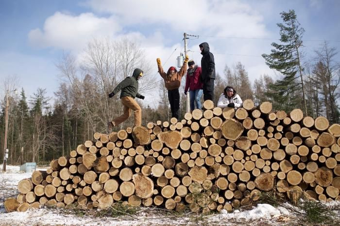 vanguards on a woodpile