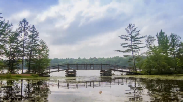 Trees and a bridge going across a lake