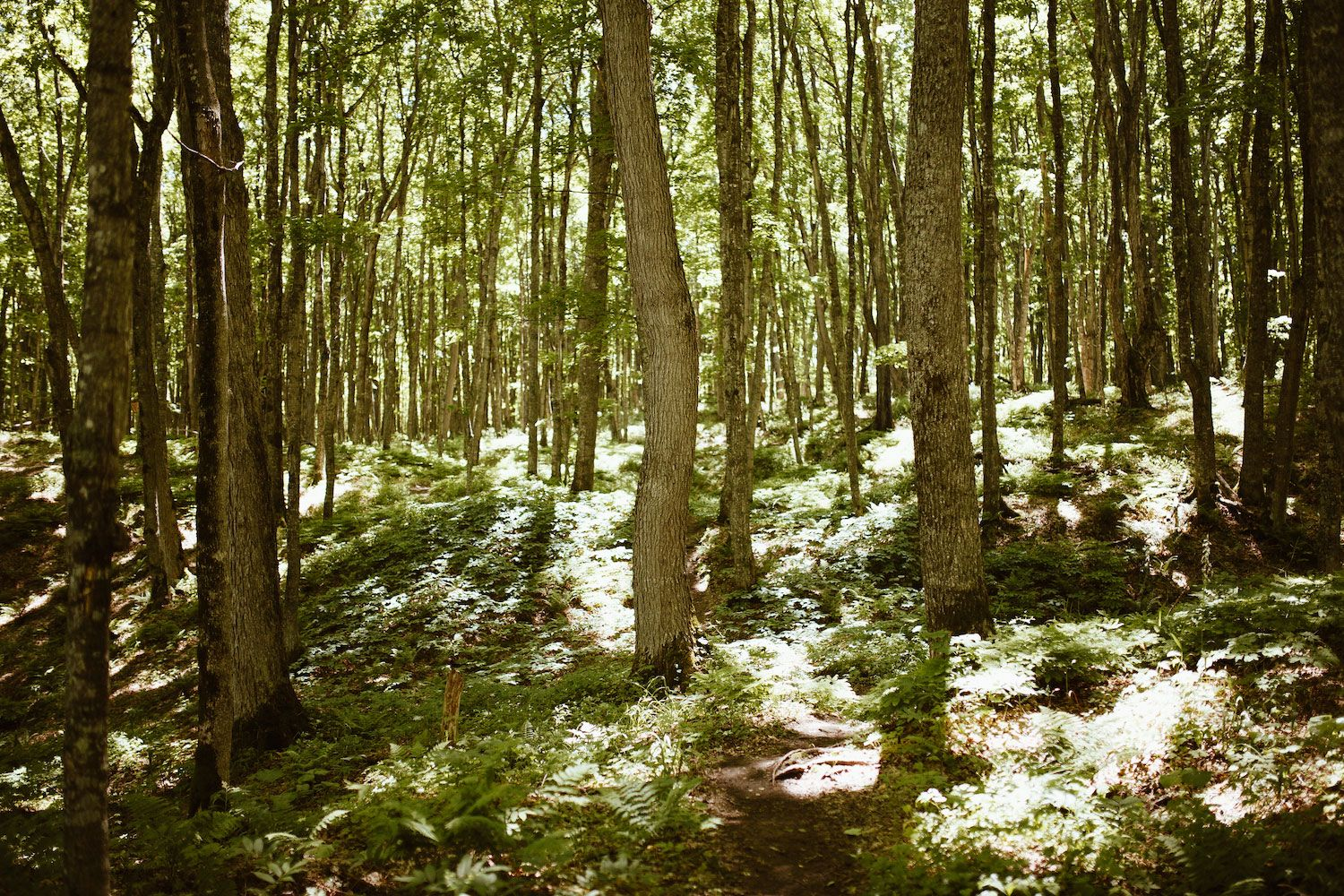 You'll find hiking trails through beautiful forests in the Northwoods of Wisconsin.