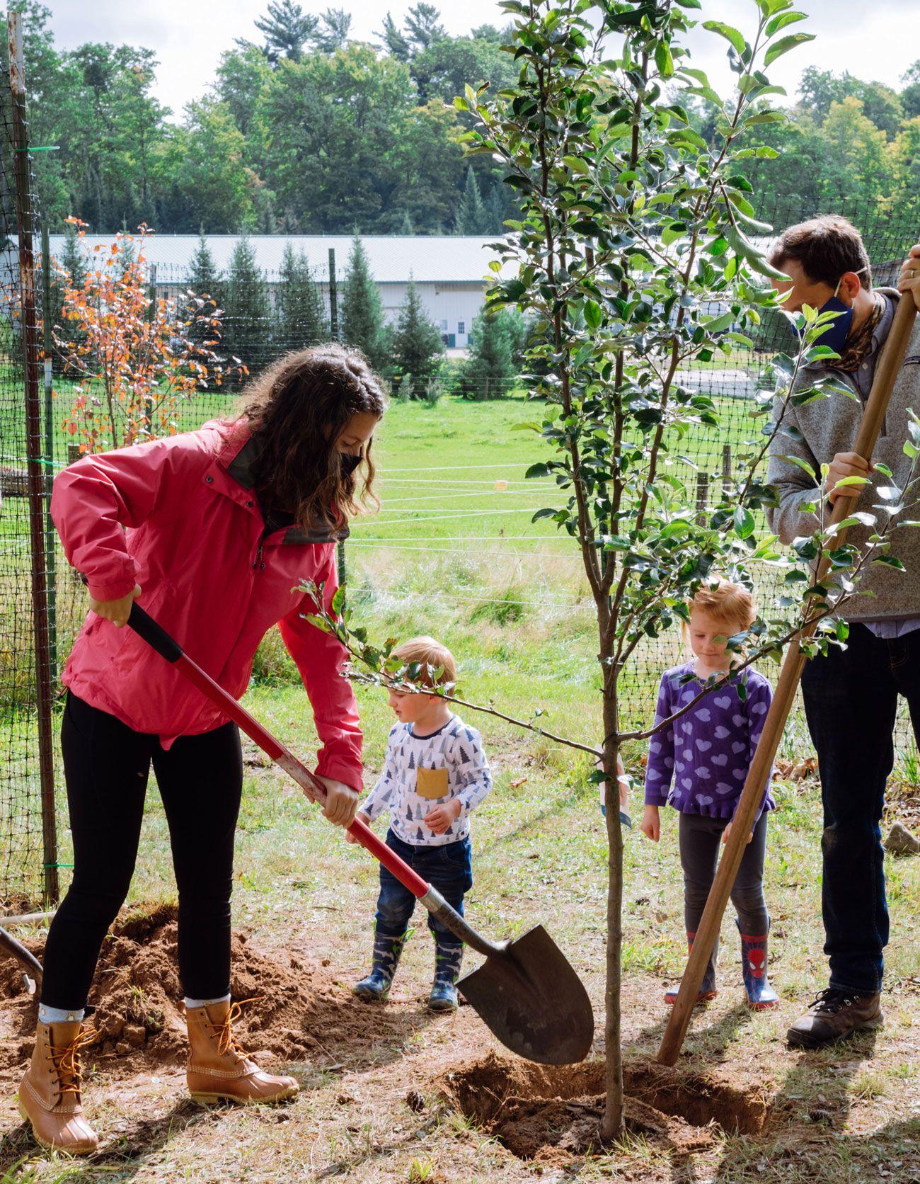 Vanguards Planting a Tree